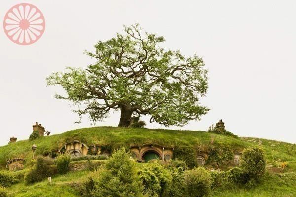 Hobbiton Matamata