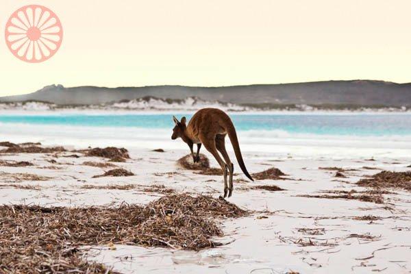 Esperance Lago Rosa Australia