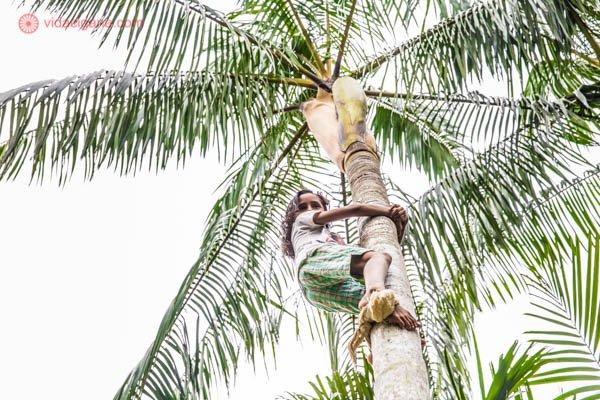 menina morena em cima de uma árvore palmeira açaí com folhas verdes e tronco laranja