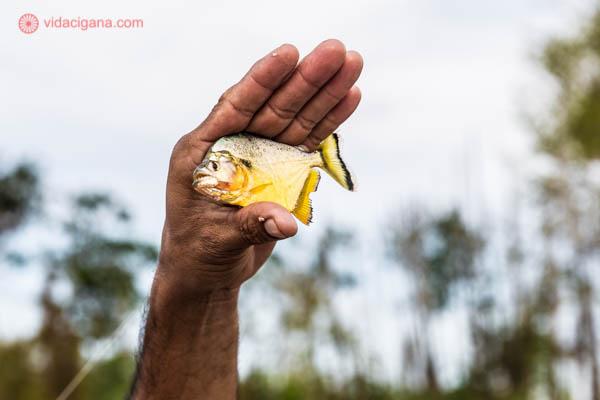 homem segurando uma piranha amarela e prata com a mão com árvores verdes ao fundo