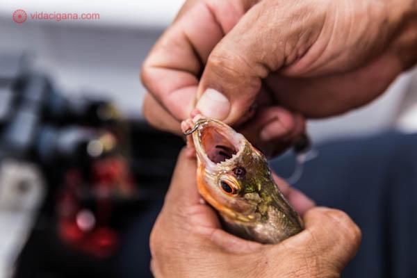 boca do peixe piranha laranja e prata cheia de dentes