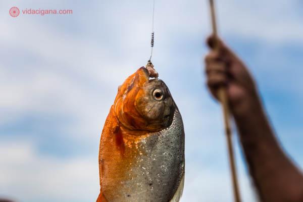 pesca de piranhas no rio Solimões