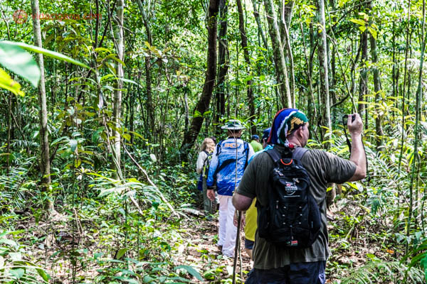grupo de turistas usando bandanas coloridas e mochilas caminha pela selva amazônica cheia de árvores verdes e