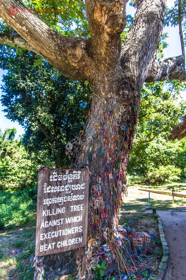 árvore alta folhas verdes fitas coloridas vermelhas, azuis amarelas sítio histórico camboja phnom penh sudeste asiático ditadura cambojana khmer vermelho