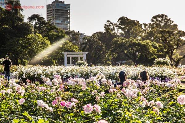O que fazer em Buenos Aires: El Rosedal em Buenos Aires, um enorme jardim com várias espécies de rosas. A foto foi tirada contraluz, com uma iluminação bem suave. Rosas rosa claro, com folhagem verde estão por toda a parte. No meio do jardim, duas mulheres estão sentadas de costas. Ao fundo, um coreto branco de estilo clássico se encontra. Várias árvores estão no fundo, com alguns prédios também.