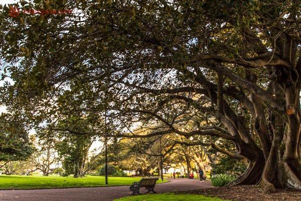 O Albert Park, em Auckland, na Nova Zelândia. Na foto, vemos um banco vazio embaixo de uma enorme árvore com folhas verdes. Um caminho de cimento se encontra entre a grama verde.