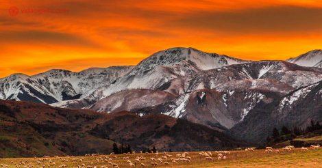 O céu pegando fogo em Canterbury, na Nova Zelândia, acima das montanhas nevadas do país, com seus campos repletos de ovelhas pastando.