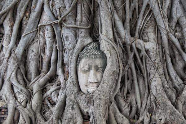 Em Ayutthaya na Tailândia fica a famosa cabeça de Buda que ficou presa entre o tronco de uma árvore. Uma das imagens mais fotografadas do país.