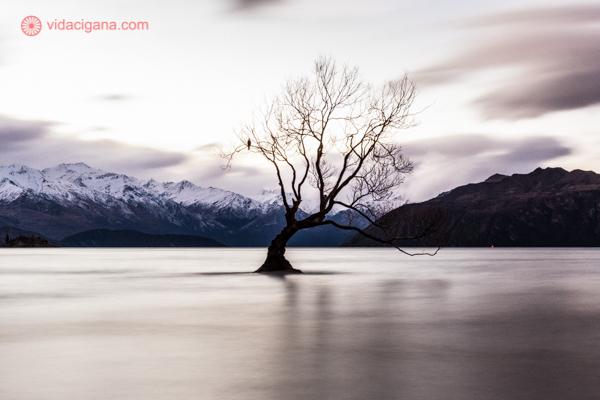 os principais pontos turísticos da nova zelândia: a famosa árvore do lago wanaka