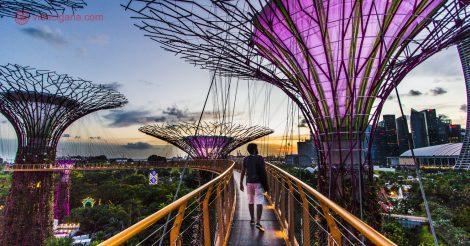 O que fazer em Cingapura: Caminhar pelo incrível Flowers by the Bay, em Cingapura, um lugar mágico.