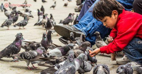 O que fazer em La Paz: ver os locais alimentarem os milhares de pombos na Plaza Murillo.