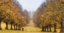 O que fazer em Belfast: árvores amarelas no outono formando um caminho em um vale, com 2 homens vestidos de preto correndo colina acima