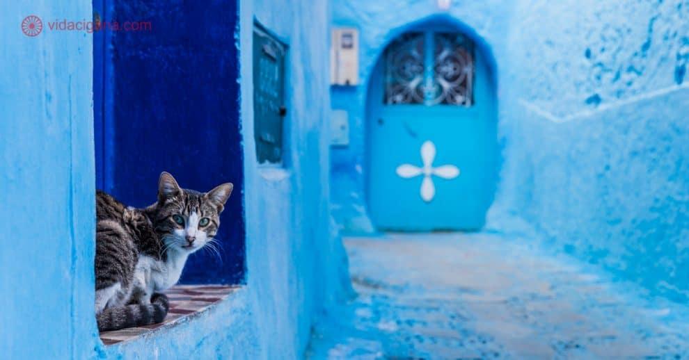 Chefchaouen: A cidade azul do Marrocos, na foto vemos um gatinho sentado no beiral de uma porta olhando para a câmera, em uma rua completamente azul, com um portão azul ao fundo.