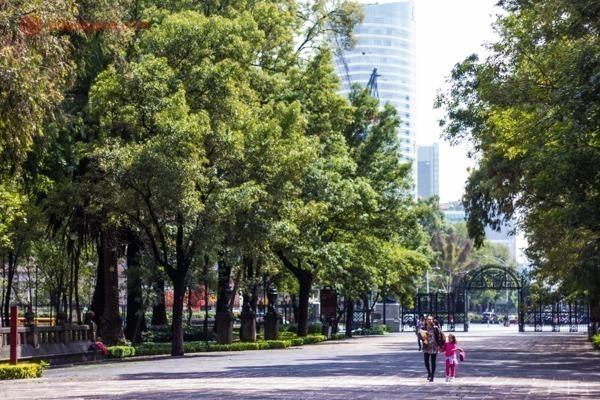 Onde ficar na Cidade do México: o bosque de Chapultepec cheio de árvores e prédios altos ao fundo