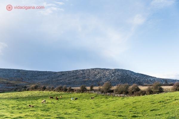 Burren National Park com seus campos verdes e suas colinas feitas de pedra