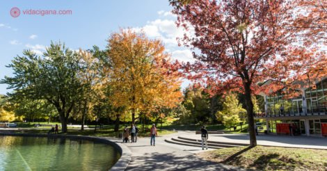 O que fazer em Montreal: o Lago dos Castores durante o outono, com folhas das árvores amarelas e vermelhas