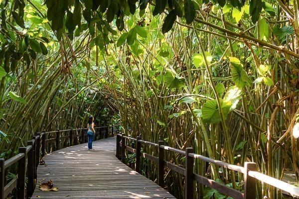 Uma mulher parada em uma pista de madeira elevada em meio a Mata Amazônica
