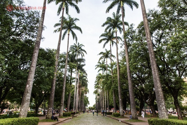 As palmeiras da Praça da Liberdade