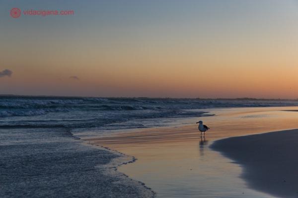 Onde ficar em Cabo Frio: uma gaivota durante o pôr do sol na Praia do Forte