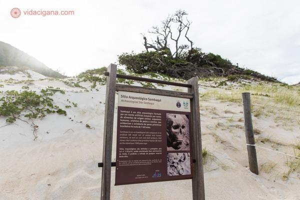 Sítio Arqueológico do Sambaquí em frente a árvore vista por Américo Vespúcio