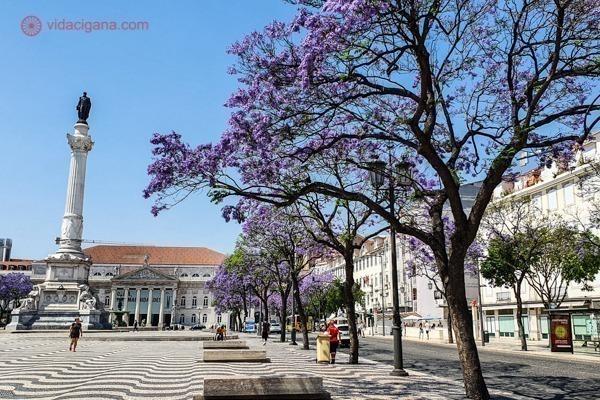 Jacarandás roxos na Praça do Rossio, em Lisboa